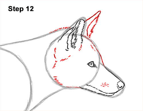 How to Draw a Red Fox Walking Side View 12