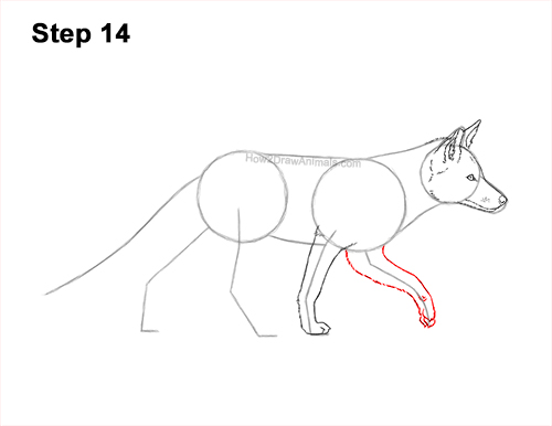 How to Draw a Red Fox Walking Side View 14