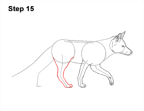 How to Draw a Red Fox Walking Side View 15