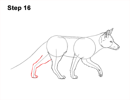 How to Draw a Red Fox Walking Side View 16