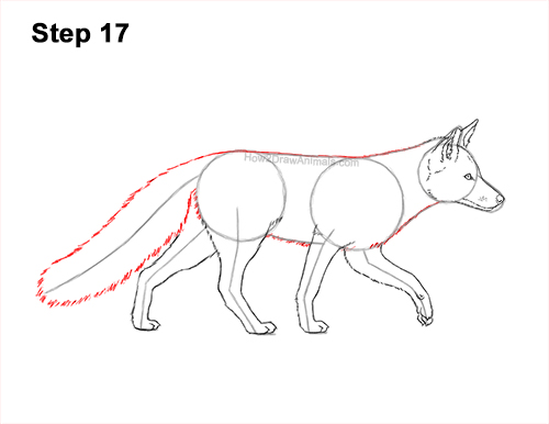 How to Draw a Red Fox Walking Side View 17