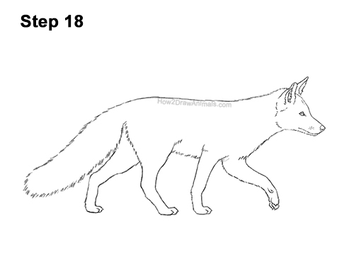 How to Draw a Red Fox Walking Side View 18