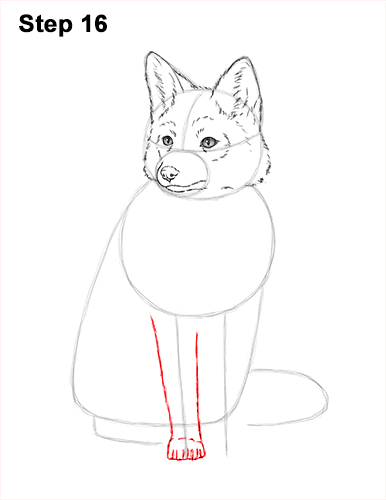 How to Draw a Red Fox Sitting 16