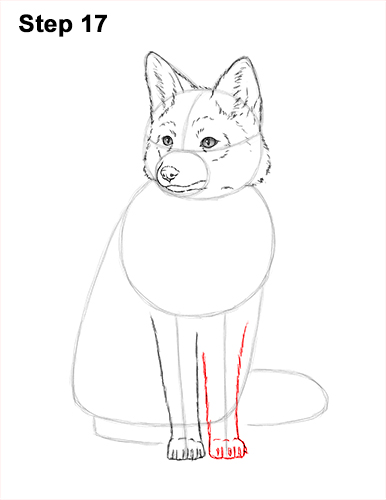 How to Draw a Red Fox Sitting 17