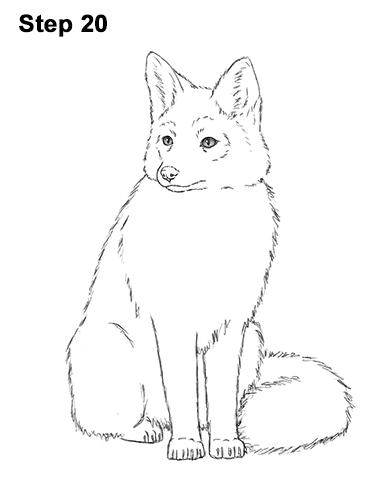 How to Draw a Red Fox Sitting 20