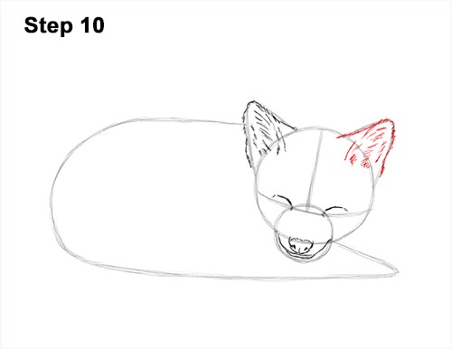 How to Draw Cute Red Fox Sleeping Asleep 10