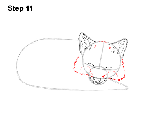 How to Draw Cute Red Fox Sleeping Asleep 11