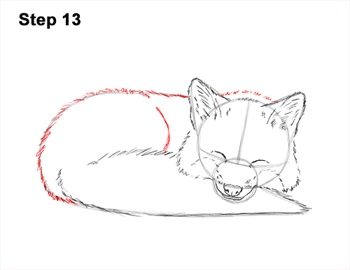 How to Draw Cute Red Fox Sleeping Asleep 13