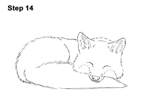 How to Draw Cute Red Fox Sleeping Asleep 14