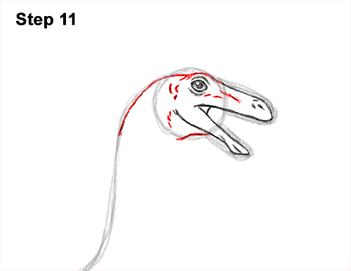 How to Draw a Gallimimus Dinosaur Running Side 11