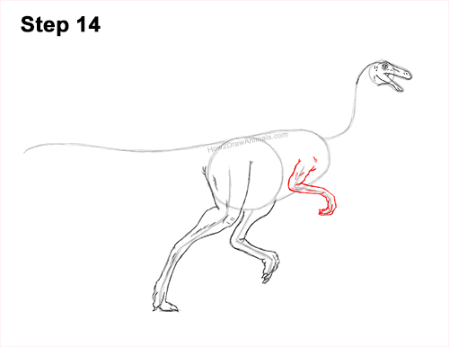 How to Draw a Gallimimus Dinosaur Running Side 14