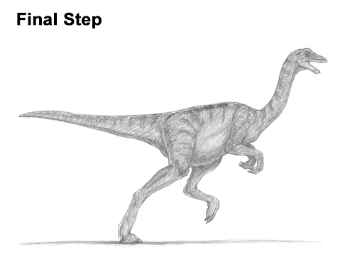 How to Draw a Gallimimus Dinosaur Running Side