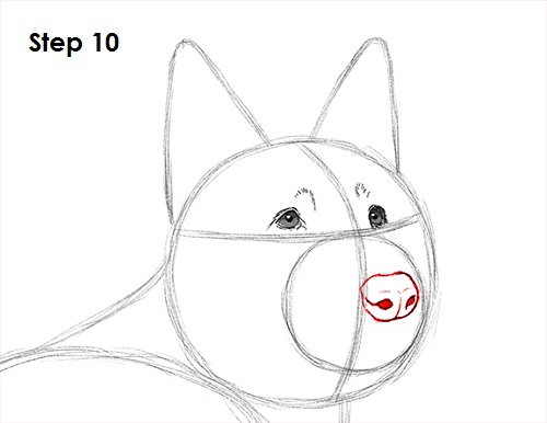 Draw German Shepherd Dog 10