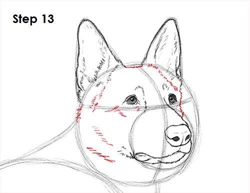 Draw German Shepherd Dog 13