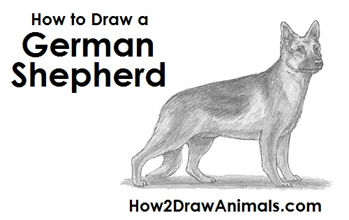 Draw German Shepherd Dog