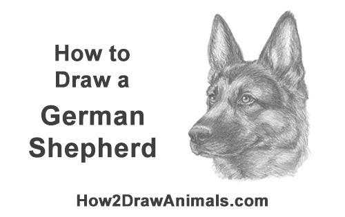How to Draw a German Shepherd Dog Head Portrait