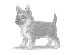 How to Draw a German Shepherd Puppy Dog