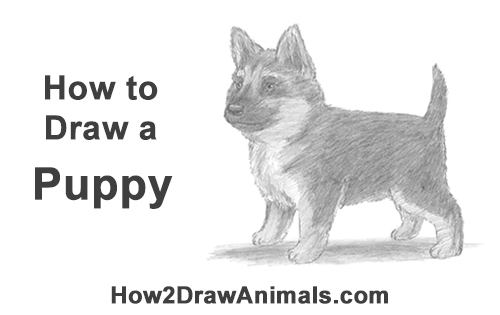 How to Draw a Cute German Shepherd Puppy Dog
