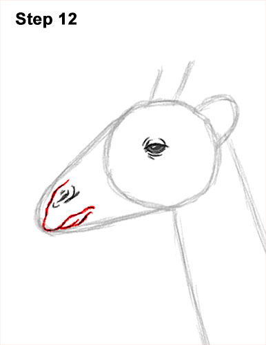 How to Draw a Reticulated Giraffe Side 12