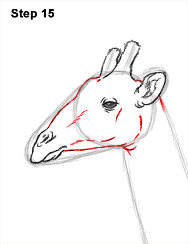 How to Draw a Reticulated Giraffe Side 15