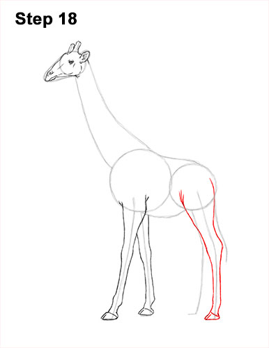 How to Draw a Reticulated Giraffe Side 18