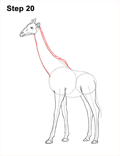 How to Draw a Reticulated Giraffe Side 20