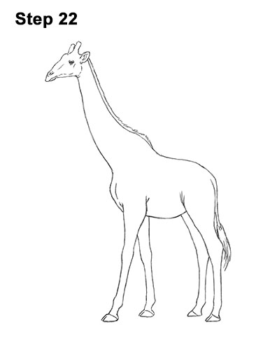 How to Draw a Reticulated Giraffe Side 22