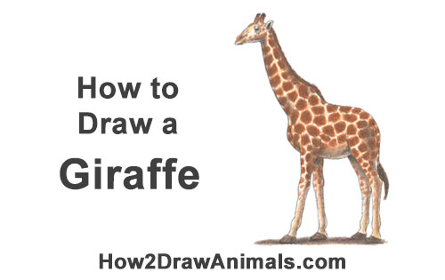 How to Draw a Reticulated Giraffe Side Color