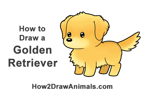 How to Draw a Cute Cartoon Golden Retriever Puppy Dog Chibi Kawaii