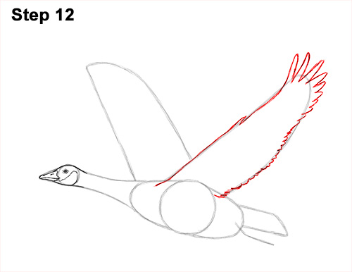 How to Draw Canadian Goose Flying Wings 12