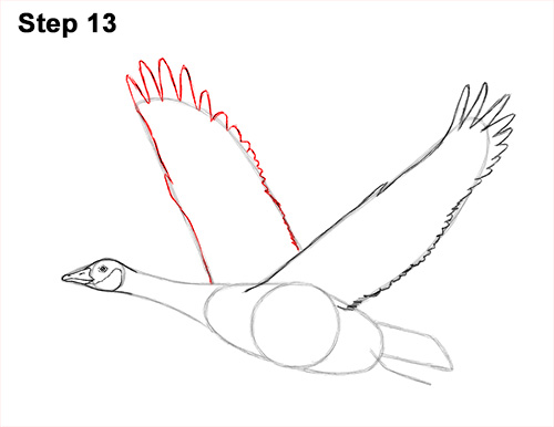 How to Draw Canadian Goose Flying Wings 13