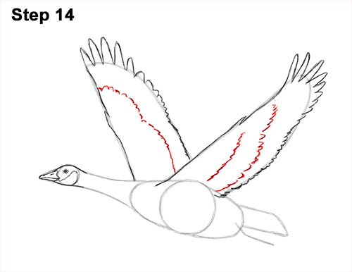 How to Draw Canadian Goose Flying Wings 14