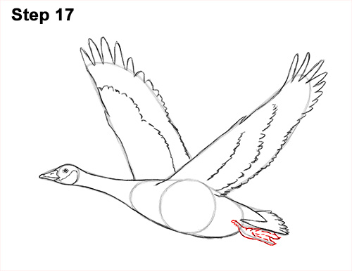 How to Draw Canadian Goose Flying Wings 17