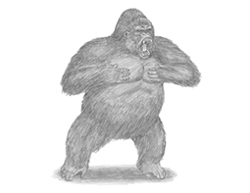 How to Draw a Gorilla Aggressive