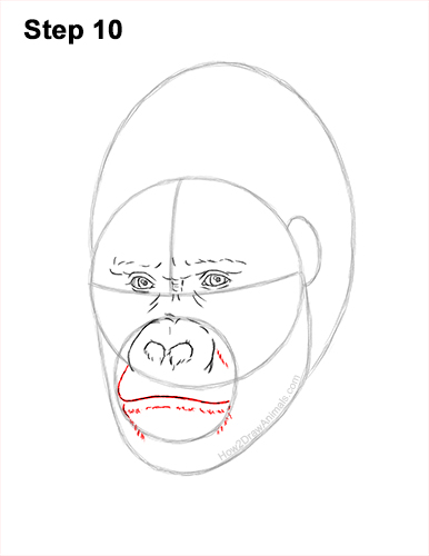 How to Draw a Gorilla Head Face Portrait 10