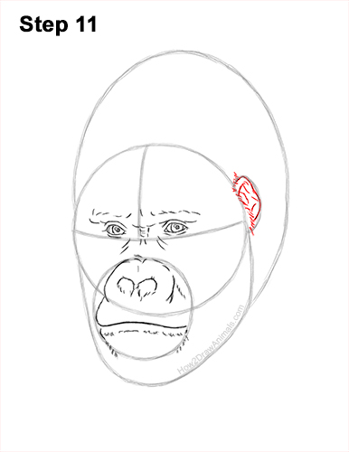 How to Draw a Gorilla Head Face Portrait 11