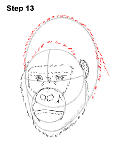 How to Draw a Gorilla Head Face Portrait 13
