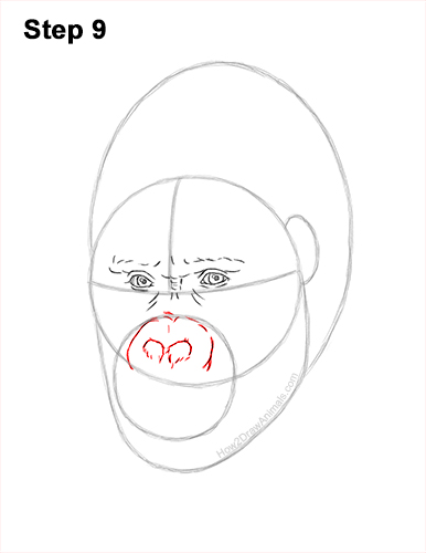 How to Draw a Gorilla Head Face Portrait 9