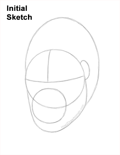 How to Draw a Gorilla Head Face Portrait Guides Lines