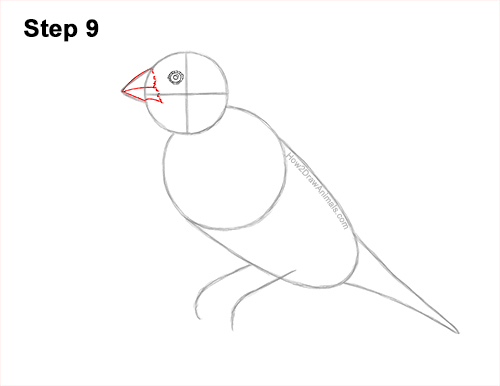How to Draw a Lady Gouldian Rainbow Finch Bird 9