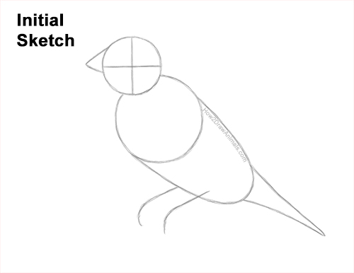 How to Draw a Lady Gouldian Rainbow Finch Bird Guides Lines