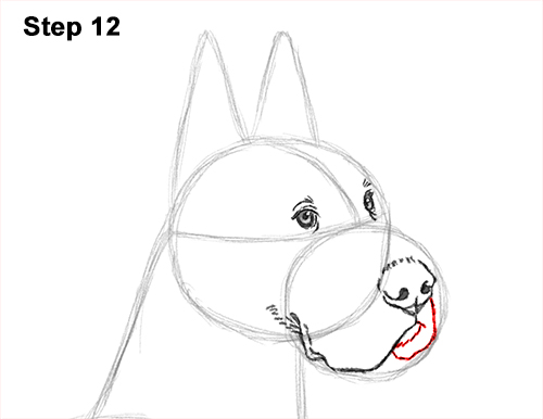 How to Draw a Tall Great Dane Dog 12