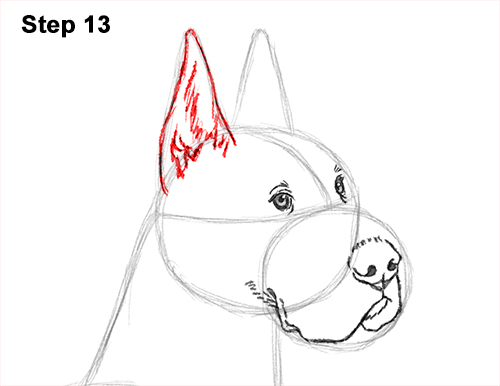 How to Draw a Tall Great Dane Dog 13
