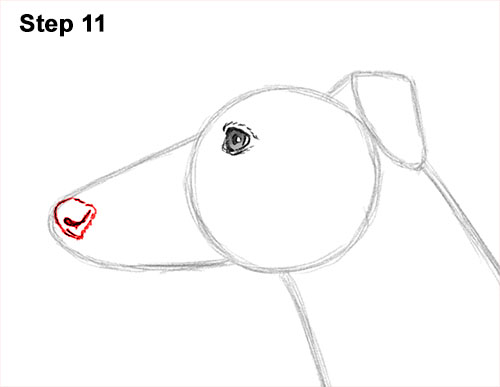 How to Draw Italian Greyhound Whippet Pupppy Dog 11