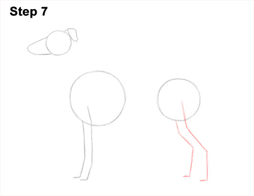 How to Draw Italian Greyhound Whippet Pupppy Dog 7