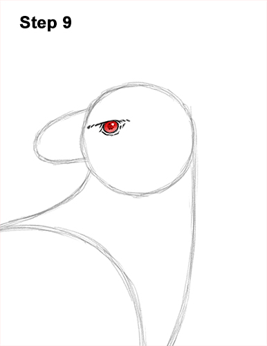 How to Draw an American Harpy Eagle Bird 9