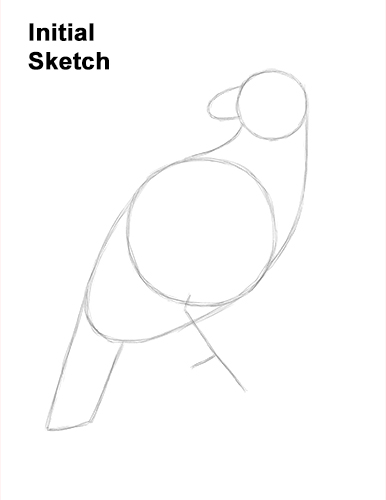 How to Draw an American Harpy Eagle Bird Guide Lines