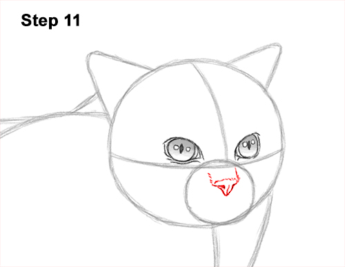 How to Draw Himalayan Cat Kitten Seal Point 11
