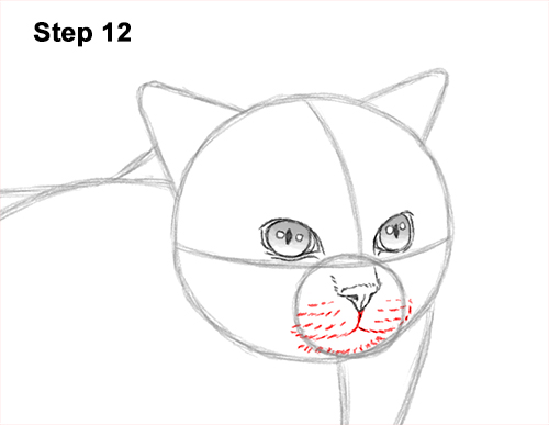 How to Draw Himalayan Cat Kitten Seal Point 12
