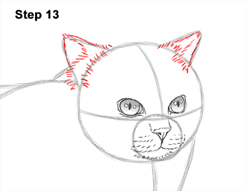 How to Draw Himalayan Cat Kitten Seal Point 13